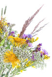 Bouquet of field flowers. And plants-unpretentious beauty of a rural life Stock Images