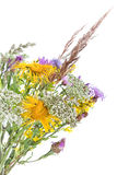 Bouquet of field flowers. And plants-unpretentious beauty of a rural life Royalty Free Stock Images