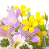 Bouquet of field flowers on a white background Royalty Free Stock Photography