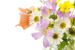 Bouquet of field flowers on a white background Royalty Free Stock Images