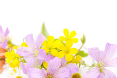 Bouquet of field flowers on a white background Stock Photography