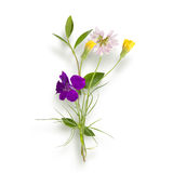 Bouquet of the field (wild) flowers Royalty Free Stock Image