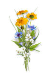 Bouquet of the field wild flowers Royalty Free Stock Photography