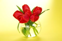 Bouquet of fine tulips in a round transparent vase Stock Photography