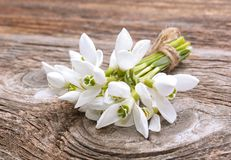 Bouquet of the first spring flowers - snowdrops Stock Photo