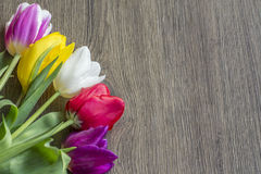 Bouquet of five delicate colored tulips Royalty Free Stock Images