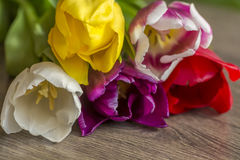 Bouquet of five delicate colored tulips Stock Photography