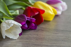 Bouquet of five delicate colored tulips Stock Images