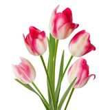 Bouquet from five flowers on white. EPS 10 Royalty Free Stock Photos