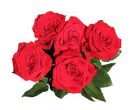 Bouquet of five red roses in dewdrops on white Royalty Free Stock Photo
