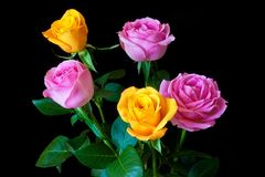 Bouquet of five roses. Bouquet  roses on a black background Stock Photos