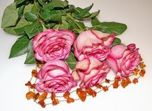 Bouquet of five roses stock image