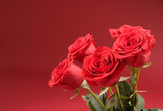 Bouquet of five roses on the red background Stock Photo