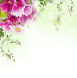 Bouquet, floral background Stock Photos