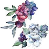 Bouquet floral botanical flower. Watercolor background illustration. Watercolour drawing aquarelle. Isolated bouquet. Bouquet floral botanical flower. Wild stock photography