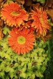 Bouquet floral, gerbera et orchidées oranges et verts Photographie stock libre de droits