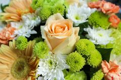 Bouquet Flower arrangement,various flowers in different colors for a special day. Mixed flower bouquet arrangement,various flowers in different colors for a Royalty Free Stock Images
