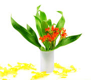Bouquet of flower and leaves. Bouquet of flower with green leaves Stock Photography