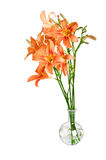 Bouquet of flower Lily on a white Royalty Free Stock Photo