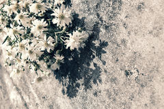 Bouquet of flower on old wall background. Amazing bouquet of flower on old wall background, simple daisy flower on ancient wall make sad, lonely feeling Royalty Free Stock Images