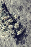 Bouquet of flower on old wall background. Amazing bouquet of flower on old wall background, simple daisy flower on ancient wall make sad, lonely feeling Royalty Free Stock Photos