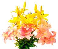 Bouquet of flowering lily. Bouquet of yellow and pink flowering lily over white background Stock Photos