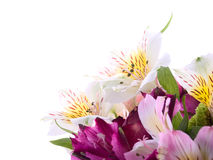 Bouquet from flowers. Isolated over white Stock Images