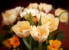 A bouquet of flowers Royalty Free Stock Images