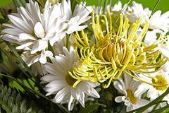 Bouquet of flowers. Beautiful bouquet of mixed flowers white and yellow Royalty Free Stock Photo