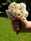 Bouquet of flowers. A little innocent hand with a bouquet of flower Royalty Free Stock Photos