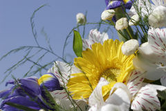 Bouquet of flowers. On the background of the blue sky Stock Image