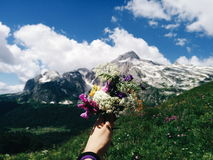 Bouquet of Flowers. The Alpine flowers Stock Photos