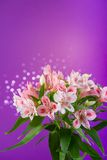 Bouquet of flowers alstroemeria Royalty Free Stock Image