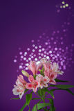 Bouquet of flowers alstroemeria Stock Photos