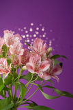 Bouquet of flowers alstroemeria Royalty Free Stock Photo