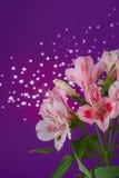 Bouquet of flowers alstroemeria Stock Image