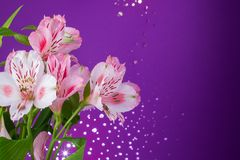 Bouquet of flowers alstroemeria Stock Images