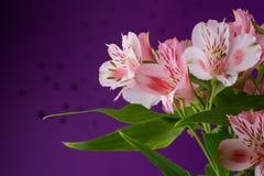Bouquet of flowers alstroemeria Royalty Free Stock Photos