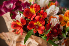 Bouquet of flowers alstroemeria Stock Photos