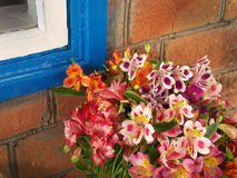 Bouquet of flowers Alstroemeria near the wall at home Royalty Free Stock Photography