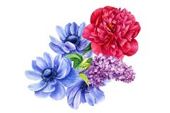 bouquet of flowers, anemones, peony, lilac, watercolor botanical illustration