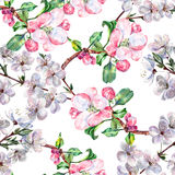 Bouquet flowers apple with flowers cherry seamless pattern Stock Photography