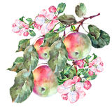 Bouquet flowers apple and fruit Stock Images