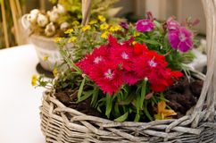 Bouquet of flowers in basket Royalty Free Stock Photos