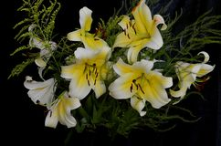 Bouquet of flowers on black background royalty free stock image