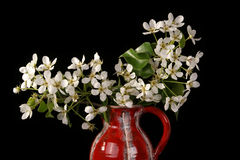 Bouquet of flowers and blossoms of cherries Royalty Free Stock Images