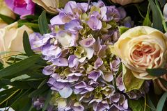 Bouquet of flowers close up. Beautiful photo collage for floral design and card celebration. Royalty Free Stock Images