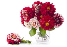 Bouquet from flowers of color of blood Royalty Free Stock Images