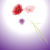 Bouquet of flowers on colorful background. Royalty Free Stock Photo