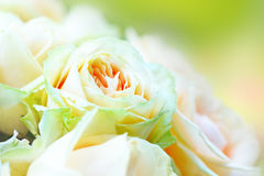Bouquet of flowers from creamy roses with soft focus. Stock Photos